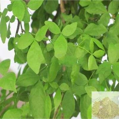 Buy Vilvam ilai / Bael Leaves Powder